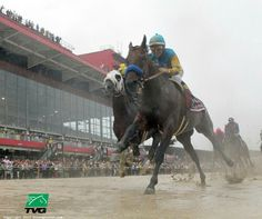 American Pharoah, winner in the mud at the Preakness at Pimlico, On board, Victor Espinoza's second Kentucky Derby-Preakness double in a row, after winning both in 2014 on Horse of the Year California Chrome. Saratoga Horse Racing, Preakness Stakes, Triple Crown Winners, Derby Winners, American Pharoah, Champions Of The World, Sport Of Kings, Racehorse, Thoroughbred