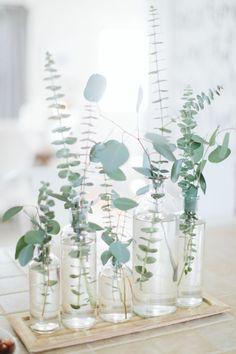 piece inspiration for minimalist wedding. Center piece inspiration for minimalist wedding.Center piece inspiration for minimalist wedding. For All Things Lovely, Deco Champetre, Eucalyptus Wedding, Eucalyptus Leaves, Eucalyptus Garland, Deco Floral, Floral Design, Wedding Table, Garden Wedding