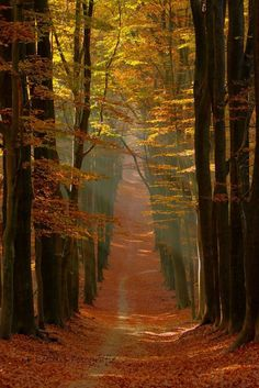 The post autumn scenery appeared first on Trendy. Beautiful Places, Beautiful Pictures, Forest Path, Autumn Forest, Autumn Rain, Autumn Scenes, Autumn Aesthetic, Fall Pictures, Beautiful Landscapes