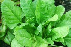 Not your soggy nemesis, spinach is great alone, raw or cooked quickly in a hot pan for maximum flavor. Or add to a salad or green shake to get some great benefits. What Are Alkaline Foods, Alkaline Diet, Spinach Leaves, Spinach Pie, Food For Pregnant Women, Spinach Health Benefits, Growing Spinach, Brain Food, Healthy Foods
