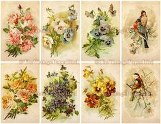 INSTANT DOWNLOAD Vintage Shabby Chic Birds by thevintagepaperbird, $3.50