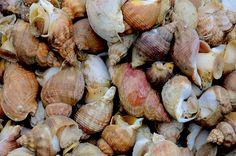 Entrees, Stuffed Mushrooms, Vegetables, Saint Jacques, Foie Gras, France, Seafood, Seafood