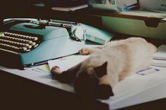 cat and typewriter