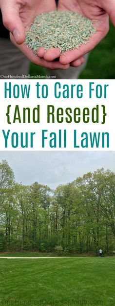 Im Gras wachsende Reben # decorationideas garden photography Fall Lawn Care, Lawn Care Tips, Planting Grass Seed, Organic Lawn Care, Lawn Repair, Types Of Grass, Lush Lawn, Lawn Sprinklers, Lawn Maintenance