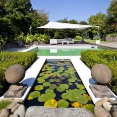 Double Backyard Pool: A Natural swimming pool system where the water filtration pool, with plants, is kept separate from the swimming pool. Looks like a traditional pool beside a decorative pond.