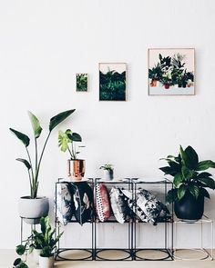 Pillows Plants this is our kind of space#UNIQFINDinspo
