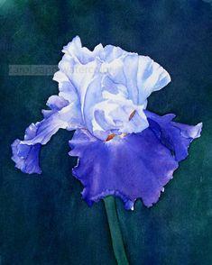 Aquarelle d'iris