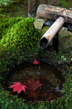 Japan - Japanese garden tsukubai stone water basin with red momiji maple leaves - Image by Photo Japan Maple Leaf Images, Garden Posts, Garden Ideas, Japan Garden, Japanese Garden Design, Maple Leaves, Garden Types, Back Gardens, Japanese Culture