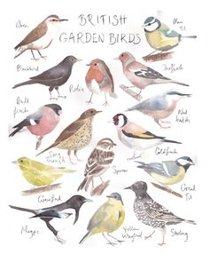 British Garden Birds by Cathy Eliot (https://www.etsy.com/listing/154221456/british-garden-birds-watercolor-painting)