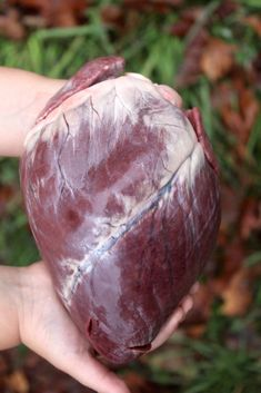 Deer hearts are one of the most underappreciated cuts of venison around. While many hunters Pheasant Recipes, Deer Recipes, I Heart Recipes, Wild Game Recipes, Deer Food, Deer Meat, Smoked Meat Recipes, Venison Recipes, Deer Heart Recipe