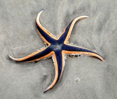Cool looking starfish.
