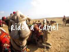 Ride a camel...check! The zoo counts, right? :)