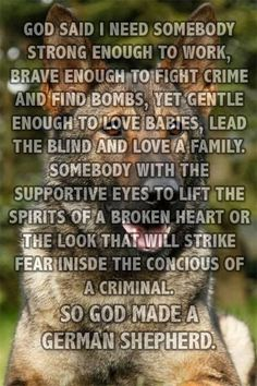 I love that my GSDs name Hardy means bold and brave in German. It's so fitting just like this description.