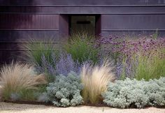 grasses in a modern landscape design