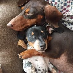Little Indiana and Reese, sleeping again