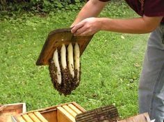 Backyard Beekeeping for Beginners