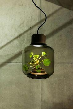 Terrarium lamps impractical but neat