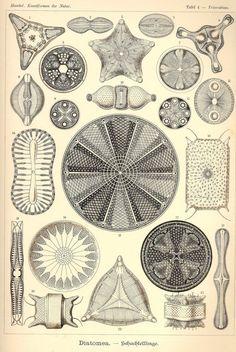 Botanical art poster. Botanical illustration. by ariadnathread