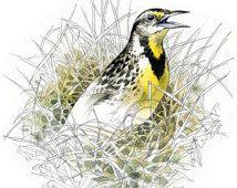 Eastern Meadowlark  watercolour - bird wildlife art - nature print of original artwork