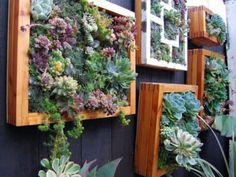 Como Hacer Un Jardín De Suculentas Vertical de forma sencilla y con estos 6 consejos podrás crear tu propio cuadro de suculentas para decorar una pared!