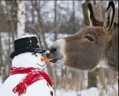 Snowman: Hey you Donkey! Donkey: What? Snowman: What are you doing? Donkey: Eating a carrot, so? Snowman: It's my nose! Donkey: Then get a real nose! Not a carrot nose! Funny Animal Pictures, Funny Animals, Cute Animals, Wild Animals, Baby Animals, Funny Photos, Funniest Pictures, Foto Cowgirl, Foto Top