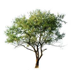png cutout tree