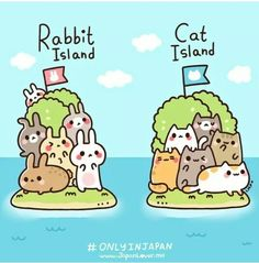Rabbit island Vs Cat island = Japan ♡