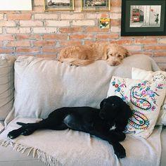 Tá ficando pequeno esse sofá  #lisafeelings #oliviamerece