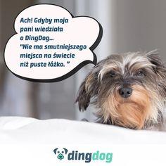 Dzisiaj trochę refleksji i literatury psięknej  #DingDog #dog #monday #app #pies