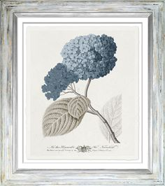 TROWBRIDGE Gallery - Imperial Flowers Blue & Grey  (Link: http://www.trowbridgegallery.com/display-set.php?SetCode=IFG)