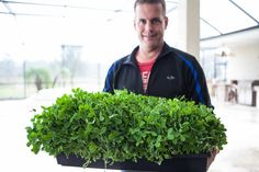 How to Grow Pea Shoots ~ https://steamykitchen.com