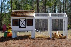 Backyard Chicken Product: Chicken Coops - Dominique Chicken Coop (10 chickens) - from My Pet Chicken