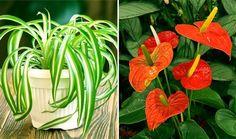 http://vychytavkov.cz/11-nejlepsi-rostlin-ktere-cisti-vzduch-odstranuji-toxiny-z-vasi-domacnosti/