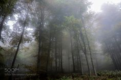 The first fogs of autumn - Le prime nebbie di autunno. by CILIN