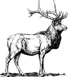 Deer Embroidery Pattern | Clker