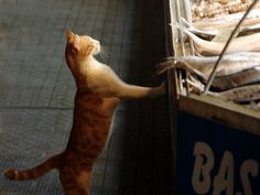 Image result for cat stealing fish