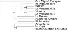 González-Cerritos, D., Núñez-Colín, C. A., Villordo-Pineda, E., Medina-Ramos, G., & González-Chavira, M. M. (2015). Variabilidad genética del membrillo cimarrón (Malacomeles denticulata [Kunth] Jones) obtenida mediante marcadores Inter Secuencias Simples Repetidas o Intermicrosatélites (ISSR) [Figura 2]. Acta Universitaria, 25(4), 26-34. doi: 10.15174/au.2015.773