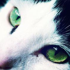 Vihreät silmät