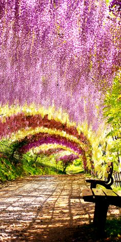 Wisteria tunnel, Japan                                                                                                                                                                                 More