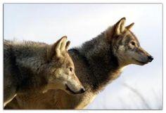 Remarkable animals - keep them safe.