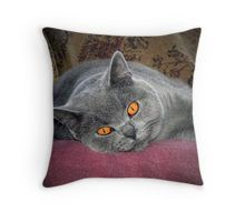 British Shorthair Blue Throw Pillow