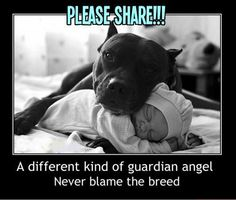 #pitbulls #dogs HA SCIENCE SHOWS PIT BULLS SCORE VERY HIGH IN EMPATHY, COMPASSION, TOLERANCE,  SEE THE PINNS ON. DOGS NEED HOMES , & Special creatures and spirits ,& other places on pinterest