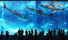aquariums | Aquariums and the meaning of life.