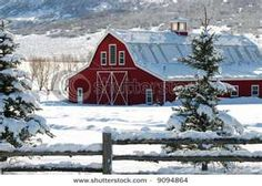 Am so thinking that Red is the colour for my stables. stunning in the winter, anything to make life sing......Cindy.