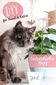 DIY Tutorial für Napf im Katzendesign plus 4 Tipps mit denen deine Katze mehr trinkt!#diy #katze #katzenliebe #napf #futternapf Plus 4, Tricks, Blog, Sewing, Cats, Animals, Drinking Fountain, Cat Design, Free Sewing
