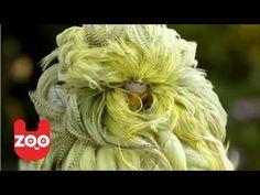 Really Weird-Looking Bird