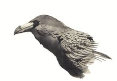 A quick Raven sketch for day 2 of Inktober!   Scott Keenan, 2015  #illustration art #inktober #inktober2015