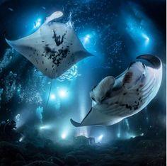 @laurentabata witnessing the Magic of the Manta Ray Night Dive in Kona, Hawaii