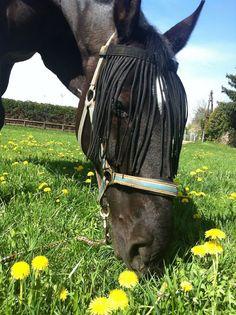 Natürliche Entgiftungskur fürs Pferd – der Löwenzahn!  Löwenzahn – ein süßer, gesunder und entschlackender Leckerbissen für unsere Pferde!  Löwenzahn - natürliche Entgiftung fuer Pferde Horses, Animals, Natural Detox, Health, Animales, Animaux, Animal, Animais, Horse