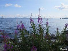 Mamman maailma: Järvi Mountains, Nature, Travel, Naturaleza, Viajes, Destinations, Traveling, Trips, Nature Illustration